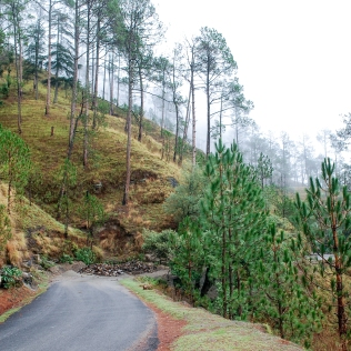 Binsar 2009 ©KartikayaNagar