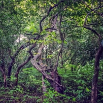 The Trees of Mulshi © KartikayaNagar