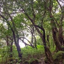 The Trees Of Mulshi ©KartikayaNagar