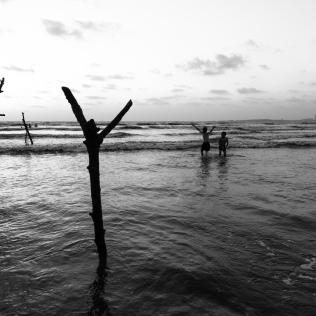 Ecosystem ©KartikayaNagar